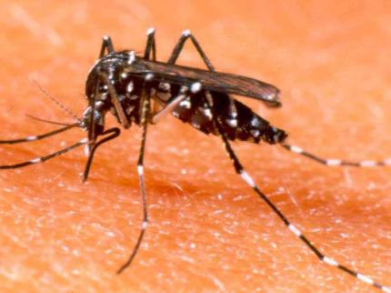 Região registra 28 casos de Dengue