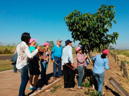 Curso de jardinagem II em Nova Luzitânia